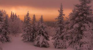Чертоги зимы